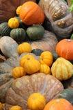 Pumpkin. Different kinds of pumpkin, very colourful Stock Photos