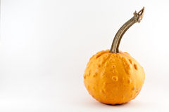 Pumpkin. An isolated yellow pumpkin in a white background Stock Image