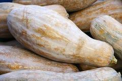 Pumpkin. The close-up of long pumpkin Royalty Free Stock Photography