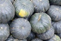 Pumpkin. The close-up of bottle-green pumpkin Stock Photos