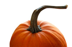 Pumpkin. Close up of pumpkin isolated on white Royalty Free Stock Image
