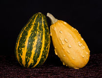 Pumpkin. Beautiful pumpkin on a black background Stock Image