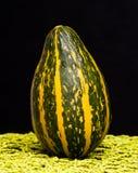 Pumpkin. Beautiful pumpkin on a black background Stock Photography
