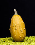 Pumpkin. Beautiful pumpkin on a black background Royalty Free Stock Images
