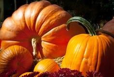 Pumpkin Stock Photography