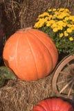 Pumpkin. Autumn Pumpkin Royalty Free Stock Photography