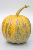 Pumpkin. Large bright ripe pumpkins in autumn Stock Photos