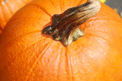 Pumpkin. Close-up to pumpkin's head Stock Photography