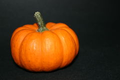 Free Pumpkin Stock Photography - 273982