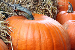 Pumpkin.  royalty free stock images