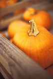 Pumpkin. Small group of orange pumpkins next to wooden fence Royalty Free Stock Photo