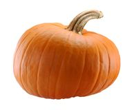 Pumpkin. Isolated on White Background with Brown Stem Stock Image