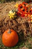 Pumpkin 6. Harvest decoration along street Royalty Free Stock Photo