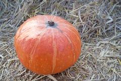 Pumpkin5 Imagens de Stock