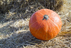 Pumpkin2 Fotografia de Stock Royalty Free