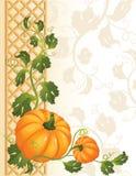 Pumpkin. The Vector illustration -  pumpkin background Stock Photos