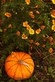 Pumpkin 7 Royalty Free Stock Image