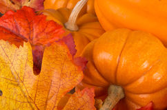 Pumpkin And Leaves Royalty Free Stock Image