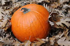 Free Pumpkin And Leaves Stock Photography - 6908122