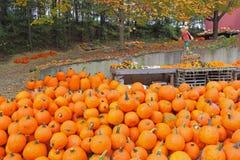 Free Pumpkin And Scarecrow Royalty Free Stock Photos - 21576488