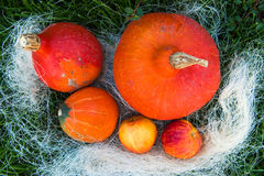 Pumpkin apple pear nuts on green grass Royalty Free Stock Photos