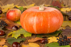 Pumpkin, appleas and chestnuts Royalty Free Stock Photos