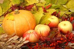 A pumpkin and apples. Autumn still life of pumpkins, apples and berries rowan Royalty Free Stock Photo