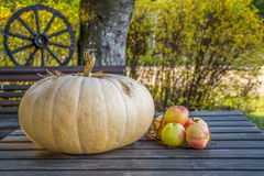 Pumpkin and apples on autumn table. Royalty Free Stock Photos