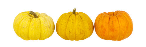 Pumpkin arrange in row isolated on white Royalty Free Stock Images