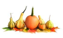 Pumpkin Arrangement Royalty Free Stock Images