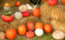 Pumpkin Arrangement Stock Images