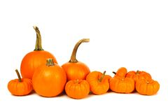 Pumpkin arrangement Royalty Free Stock Photo