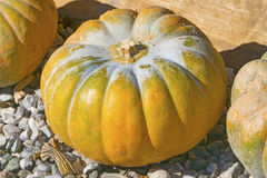 Pumpkin as decoration for autumn and  halloween Stock Image