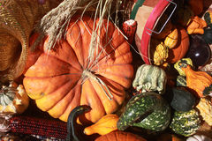 Pumpkin with Assorted Gourds Stock Photos