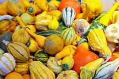 Pumpkin assortment Royalty Free Stock Images