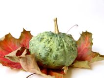 Pumpkin and Autumn Leaves Royalty Free Stock Photography