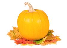 Pumpkin with autumn leaves Royalty Free Stock Photography