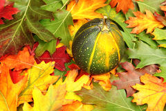 Pumpkin on the autumn leaves Stock Image