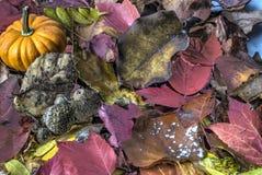 Pumpkin on autumn leaves Royalty Free Stock Photos