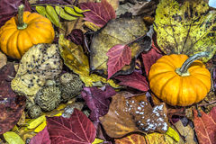 Pumpkin on autumn leaves Royalty Free Stock Photography