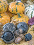 Pumpkin  and autumn leaves Stock Photography