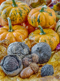 Pumpkin  and autumn leaves Stock Photo