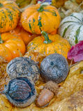 Pumpkin  and autumn leaves Royalty Free Stock Photo