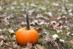 Pumpking in October stock photography