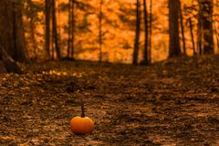 Pumpkin in a forest royalty free stock images