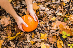 Pumpkin in autumn leaves Stock Image