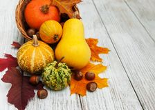 Pumpkin and leaves Stock Photography