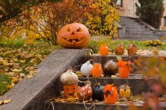 Pumpkins and other decor items for Halloween Stock Photography
