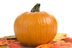 Pumpkin With Autumn Leaves. A pumpkin sits on top of some autumn leaves with a white background Stock Photos