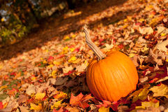 A pumpkin in autumn leaves Royalty Free Stock Images